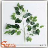 Fogli bianchi del Banyan del foglio artificiale del Ficus sul commercio all'ingrosso
