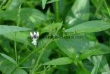 Порошок Andrographolide выдержки Andrographis Paniculata