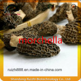 Morchella гриба зеленой еды высокомарочные товары
