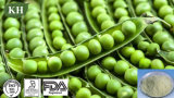 고품질 비 GMO 완두 단백질 분말 80%