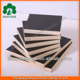 18mm Black Film Faced Plywood Price com Best Selling