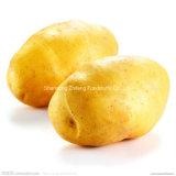 200g와 위 신선한 감자