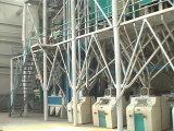 máquina do rolo da farinha do milho 50t/D