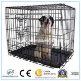 최대 대중적인 애완 동물 전시 감금소
