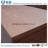 家具のための9mm/17mm Bintangor/Okoume/Pine/Bichの合板