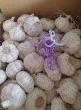 Sacchetto della maglia che imballa aglio bianco normale fresco (4.5-6.0cm)