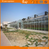 Planting Vegetables를 위한 긴 생활 Span Film Roof Glass Wall Greenhouse