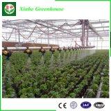 Hersteller-landwirtschaftliches Plastikfilm-Gewächshaus für Gemüse/Frucht