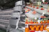 Système profond de déchets sauvages de grilleur de système de cage de batterie de poules de couche