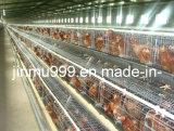 un type cage automatique de poulet de couche de matériel de ferme avicole