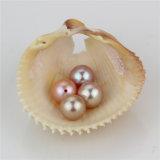Granos púrpuras de la perla natural de la calidad del color 7.5-8m m AAA de Snh mejores