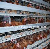 Клетка цыпленка птицефермы от Китая