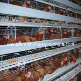 Geflügelfarm-Huhn-Rahmen von China