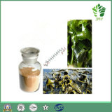 Extrait direct Fucoxanthin 5%~20%, Fucoidan 85% d'algue brune d'approvisionnement d'usine