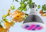 Горячий завод сбывания 12With24W СИД растет свет