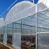 새로운 하이테크 농업 다중 경간 필름 녹색 집