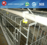 Un tipo jaula de la granja de pollo del marco de acero de 90/120 capacidad de los pájaros (A-4L120)