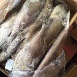Рыбы куртки Filefish-Кожи рывка
