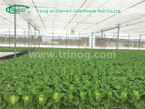 Multi Span Vegetable Greenhouse für Sale