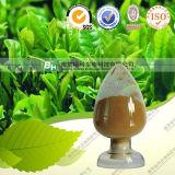 Naturale e Factory Supply Food Grade Green Tea Extract