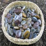 Pedra de pedra de cinzeladura animal da decoração