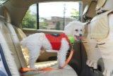 Haustier-Hundekatze-Auto-Sicherheitsgurt-Sicherheits-Leitungskabel-Sicherheitsgurt-Verdrahtung