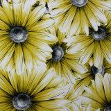 La plus défunte belle fleur 2016 conçoit le papier peint