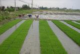 Tela não tecida para a proteção agricultural