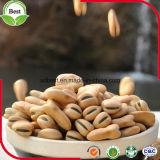 Feijões largos da boa proteína da alta qualidade