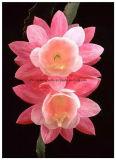Greensource, pellicola di scambio di calore per bello Yuhua