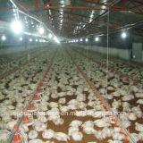Цыпленок полного комплекта поднимая оборудование для бройлера