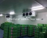 Quarto frio do projeto do armazenamento do quarto frio para frutas e verdura do alimento