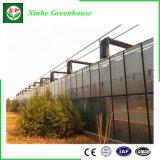 Serre chaude en verre agricole d'envergure multi de qualité pour l'élevage