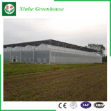 Vegetable/Flower Growing를 위한 정원 또는 Farming Tunnel Plastic Film Greenhouse