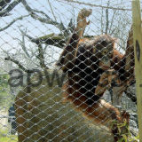 Animal de alambre de acero inoxidable de cuerda de malla / Fábrica Fence