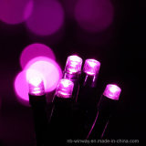 태양 강화된 100개의 LED 로즈 빨간 옥외 크리스마스 끈 빛