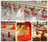 Broiler Productionのための自動Poultry Farm Equipment