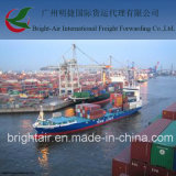 Fob Trade DDU&DDP LCL/FCL Ocean Freight Company 광저우 중국에서 덴마크에 해외 선적 컨테이너 배