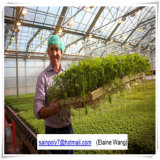 Het enige Landbouw Groene Huis van de Spanwijdte voor Tomaat