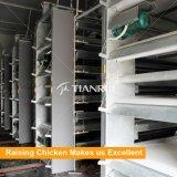 Tianruiは鶏Fram AまたはHのタイプの家禽のケージを設計する