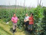 Concime organico di Unigrow su qualsiasi piantatura di verdure