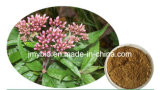 20 : 1 extrait d'herbe d'Eupatorium de fortune de 5:1 de 10:1, hypérine de résolution d'humidité, sang de commande et stase dissolvante, estomac Invigorating
