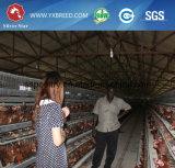 Gaiola forte e durável da grelha da galinha