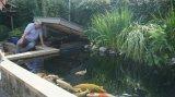 Drehendes Trommelfilter-Meerwasser-Filter für Aquakultur