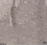 [ترزّو] يشبع جسم يفرش خزف [600إكس600مّ] ([إك01])