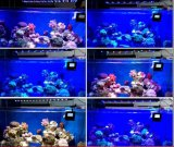 Dimmable Full Spectrum Wire / Wireless LED Aquarium Lighting para uso marítimo