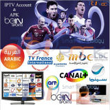 Арабский интернет IPTV Box Channels с 700+ HD арабским Channels All Bein Sport & All Osn Channels & Mbc Channels + Wireless Mouse Free Gift All