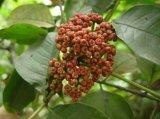 Выдержка 98%Rutaecarpine Fructus Evodiae для дополнений еды