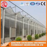 Multi-Überspannung rostfreier Stahl-Aluminiumprofil-Polycarbonat-Blatt-Gewächshaus für Gemüse