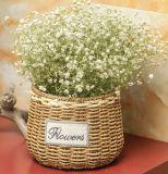 (BC-SF1001) Cestino naturale Handmade del fiore della paglia di alta qualità